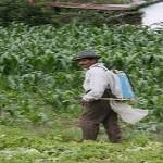 Muere campesino por intoxicación de agroquímicos en Amuzgos