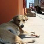 Reclaman el aumento de perros callejeros en Tlaxiaco